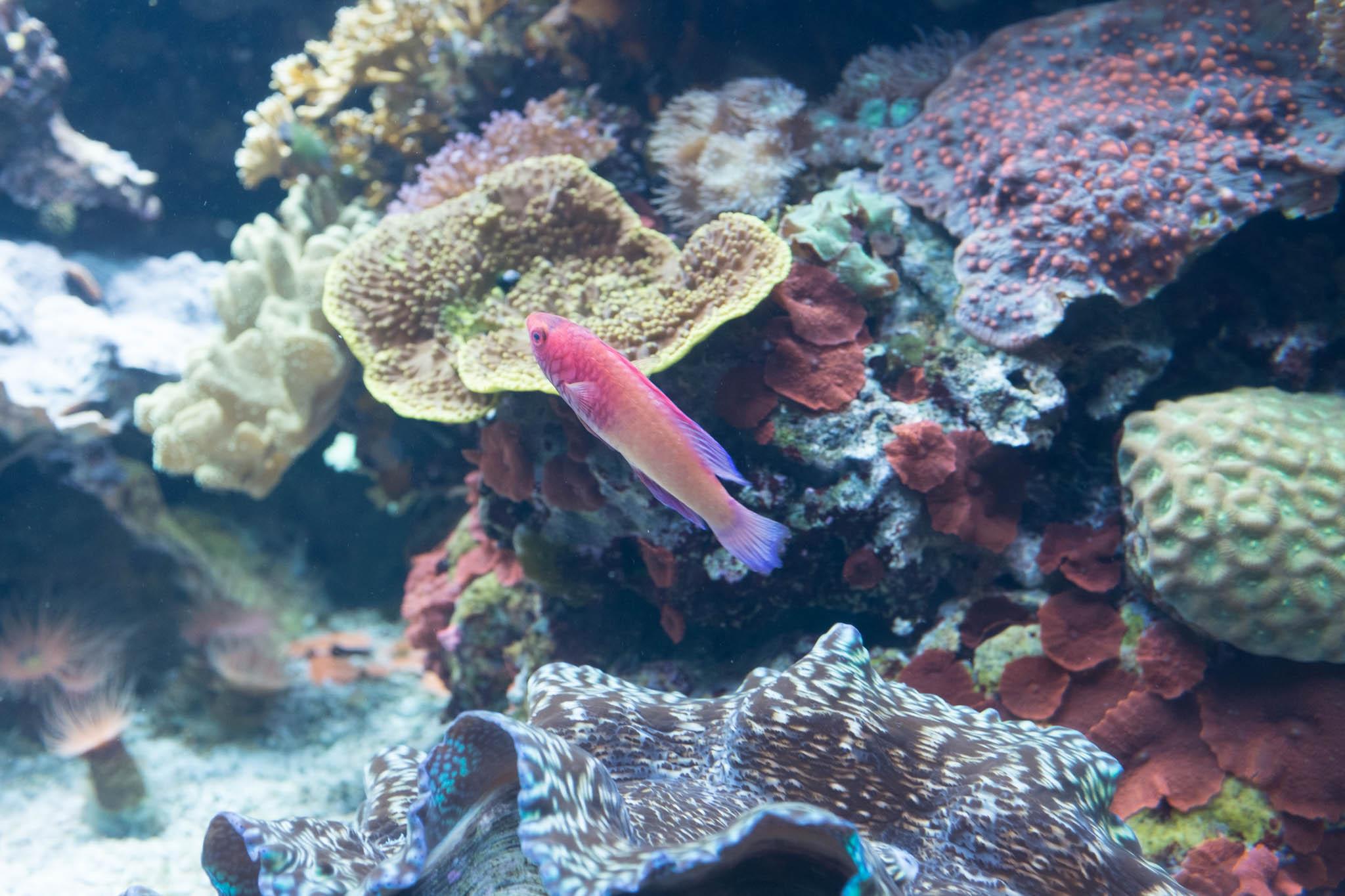 Aquarium of the Pacific-3-30-16-1425.jpg