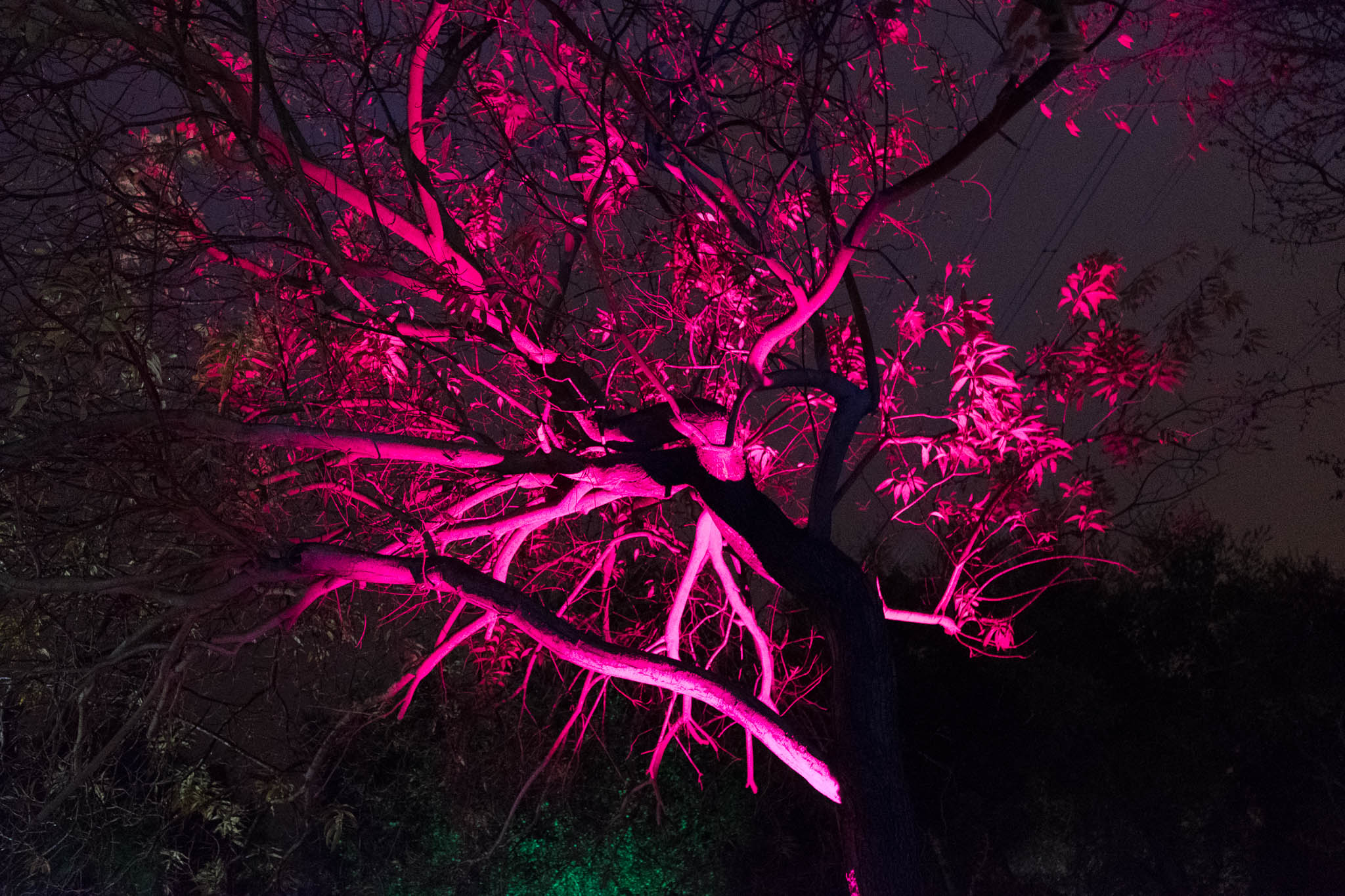 Descanso Gardens-2016-4517.jpg