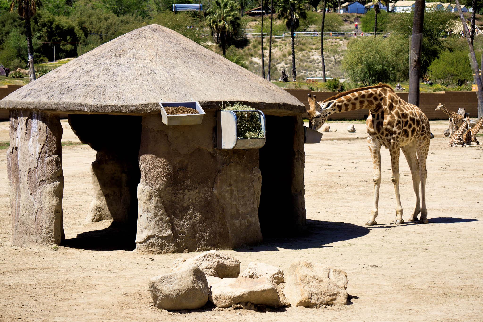 San Diego Safari Park-2016-.jpg