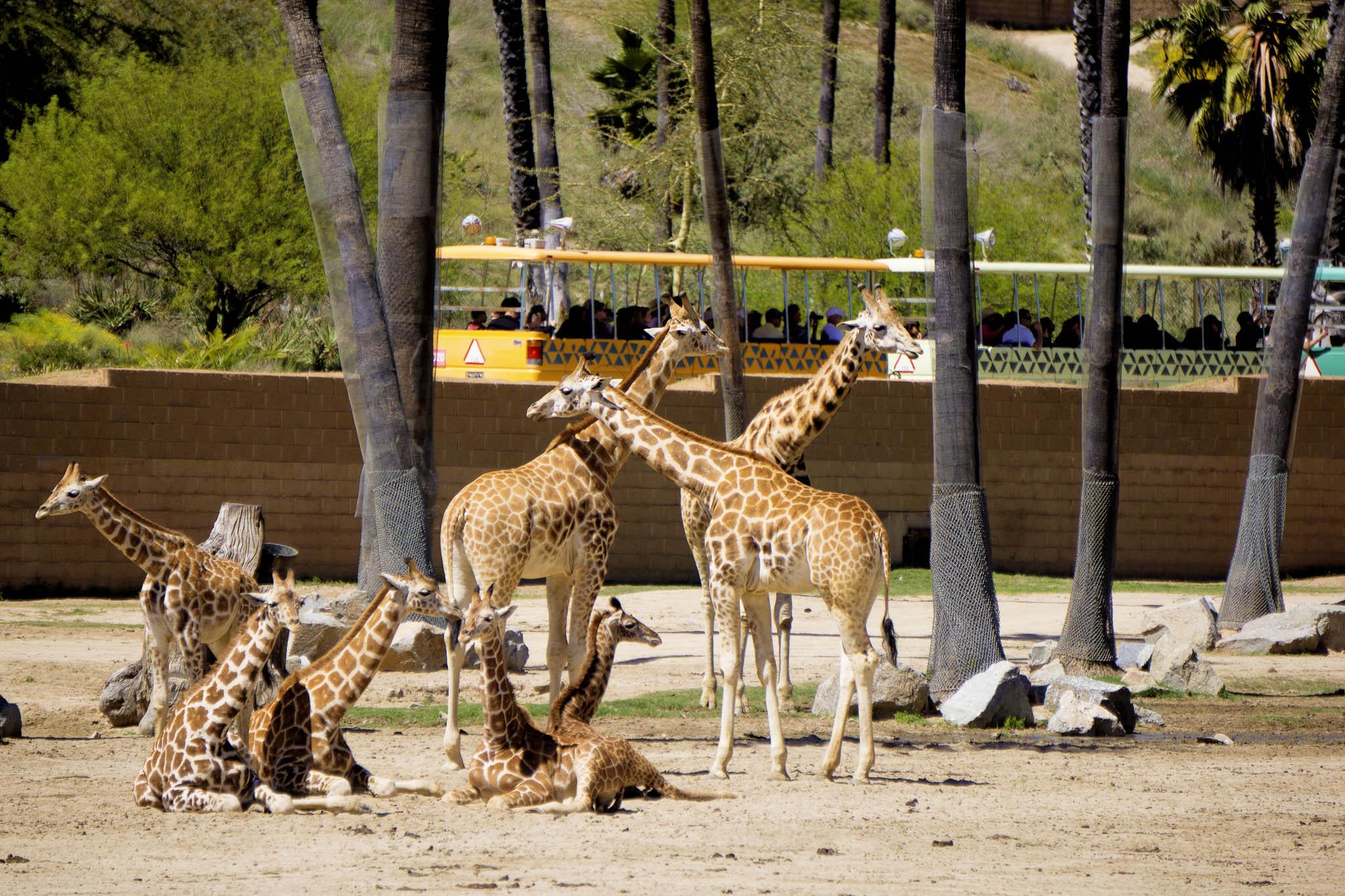 San Diego Safari Park-2016--2.jpg