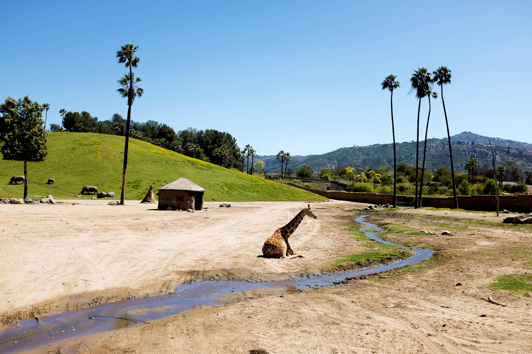 San Diego Safari Park-2016--5.jpg