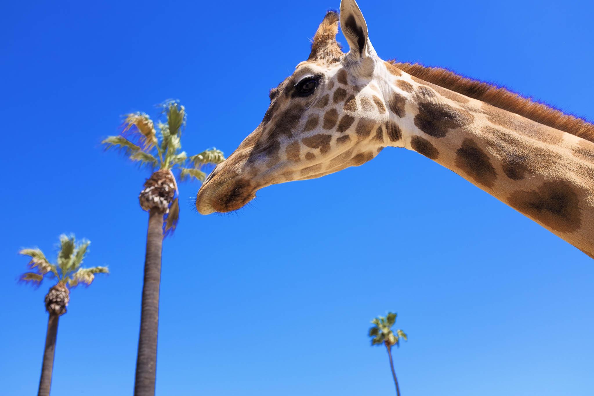 San Diego Safari Park-2016--6.jpg