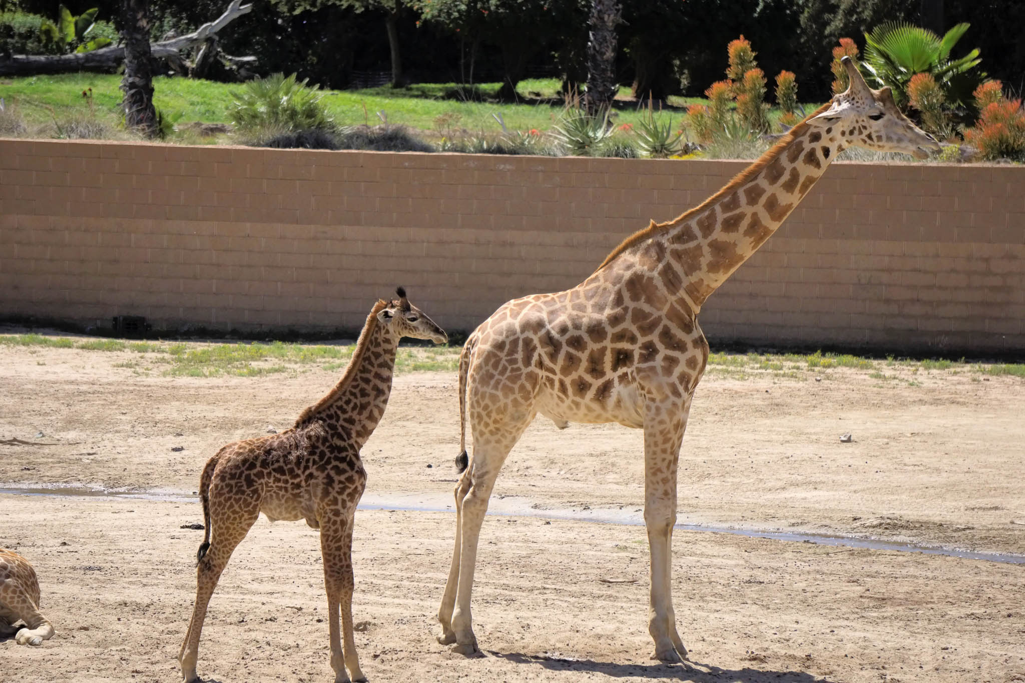 San Diego Safari Park-2016--7.jpg