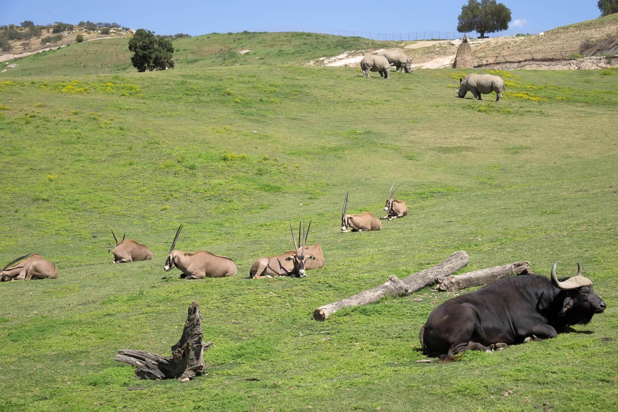 San Diego Safari Park-2016--8.jpg
