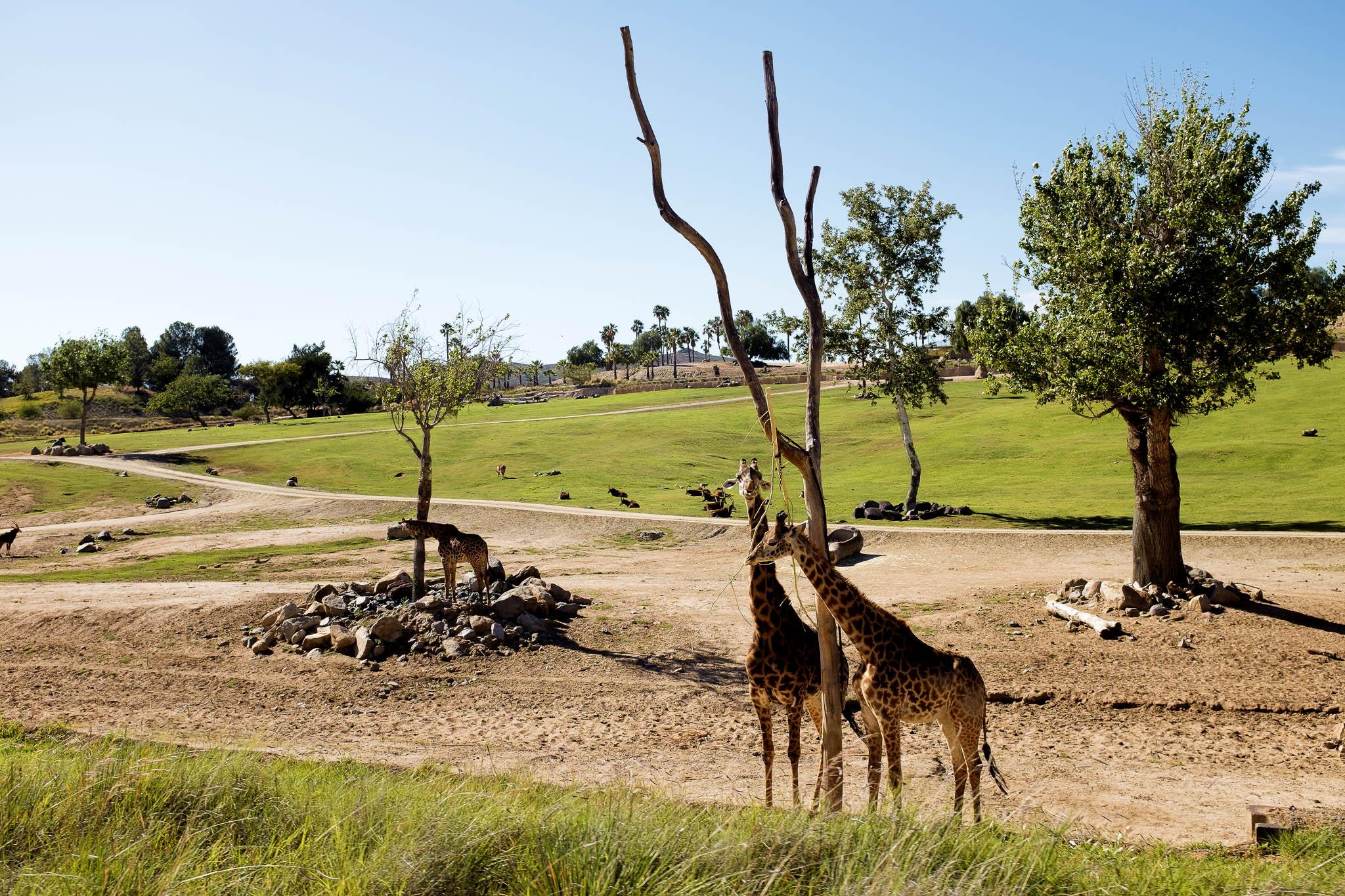 San Diego Safari Park-2016--13.jpg