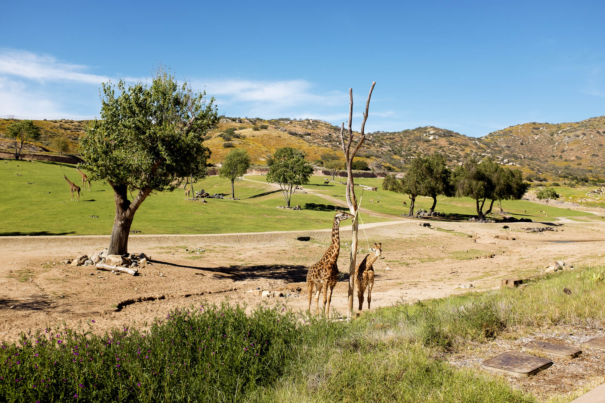 San Diego Safari Park-2016--12.jpg