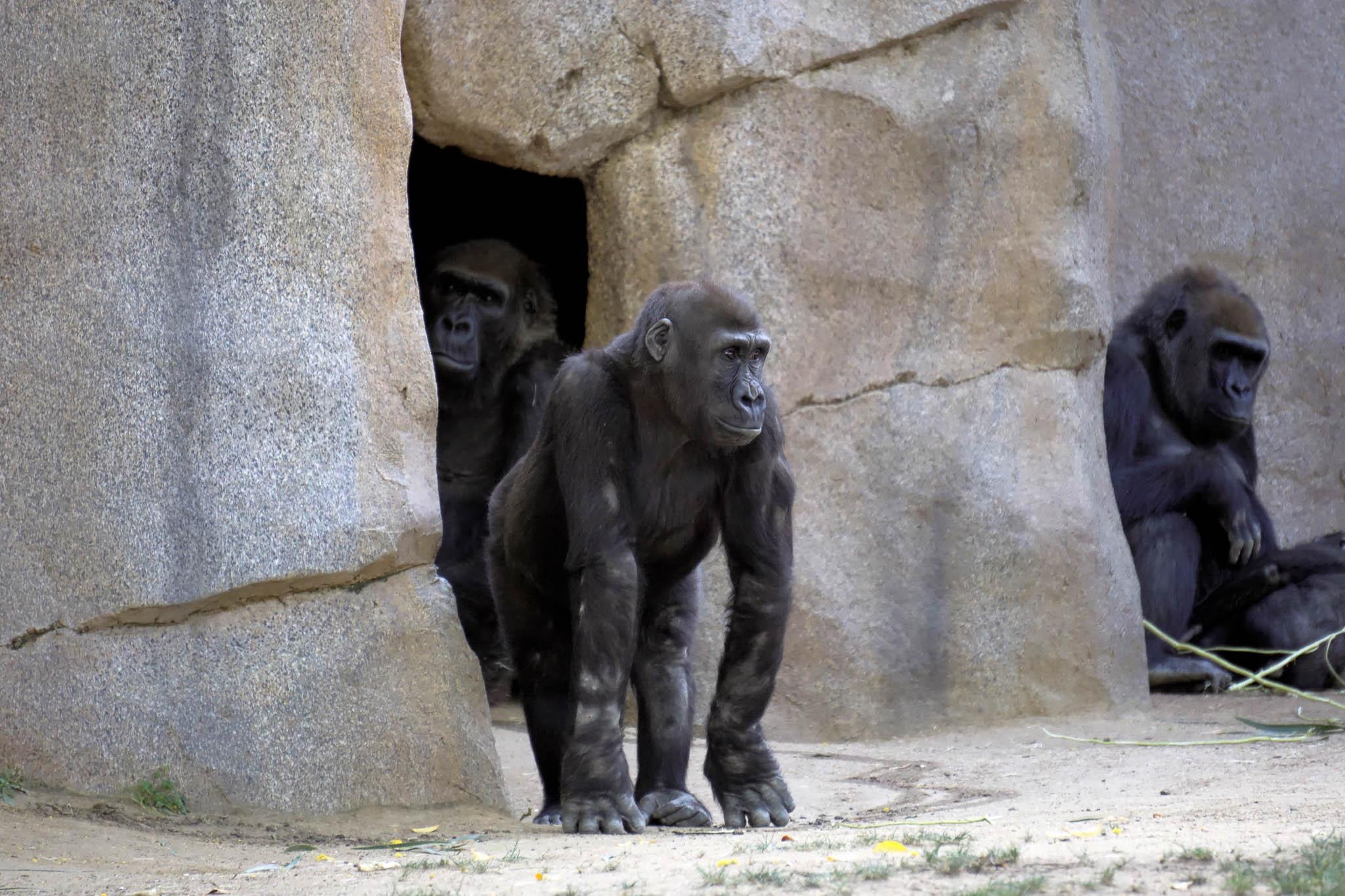 San Diego Safari Park-2016--14.jpg