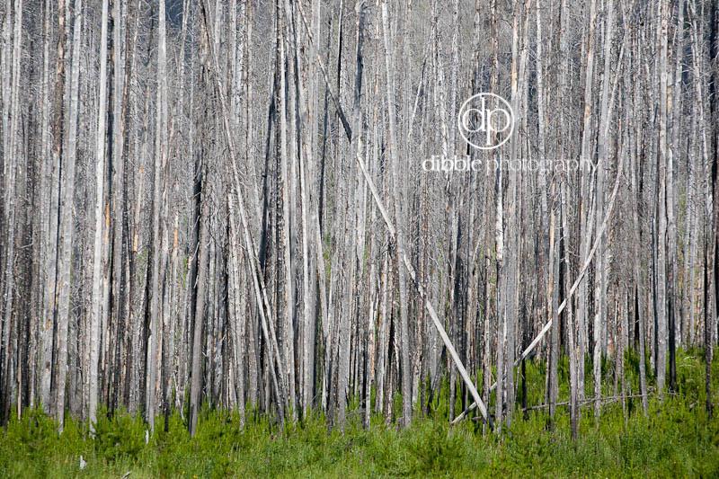 5-burnt-forest1.jpg