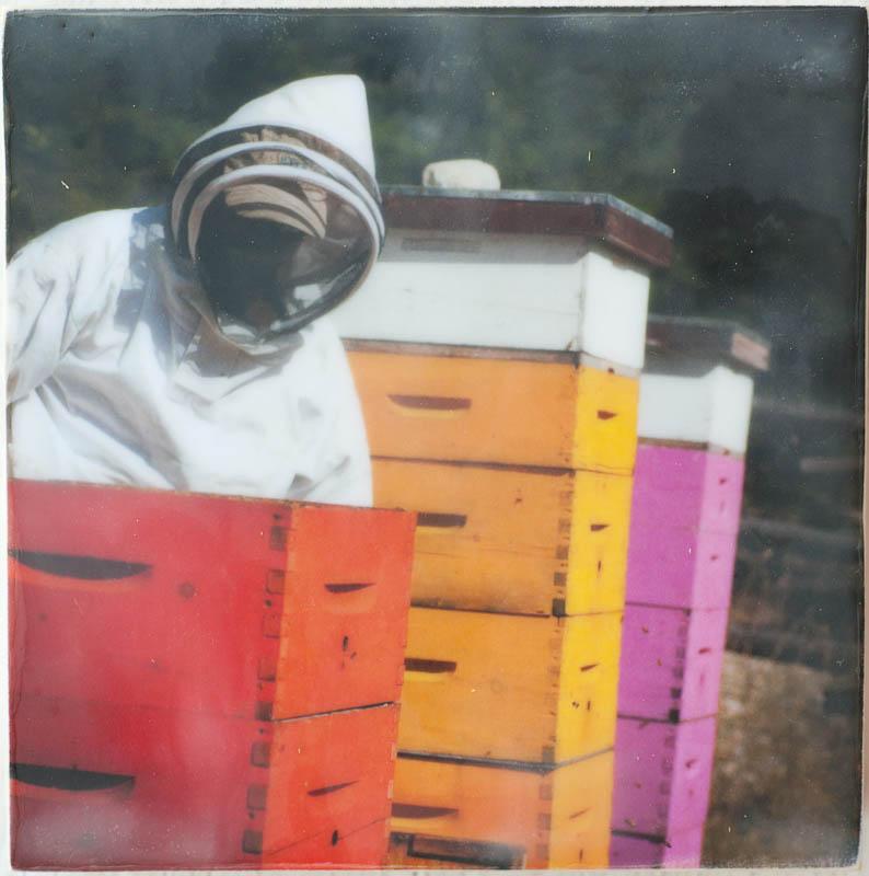 encaustic-bees-16.jpg