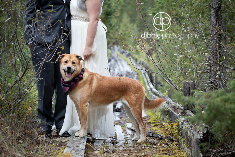 wilmer-backyard-wedding-13.jpg