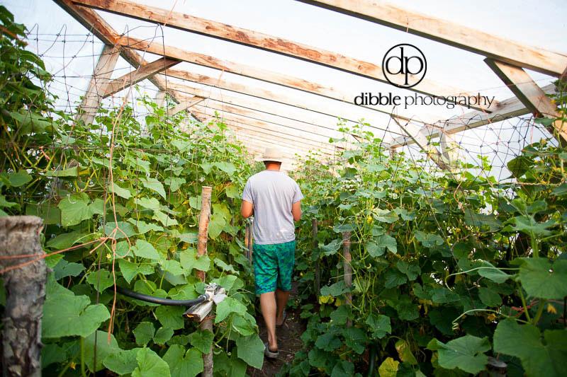 ebe-garden-04