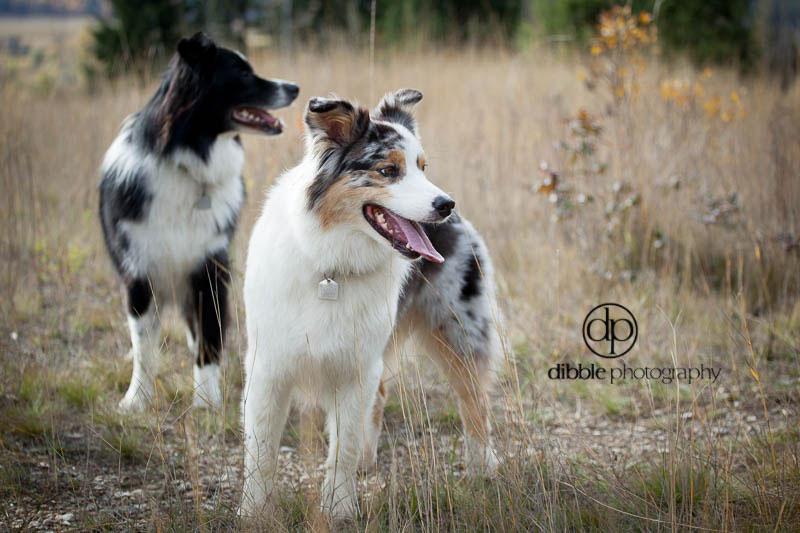 family-dog-photos-DL05.jpg