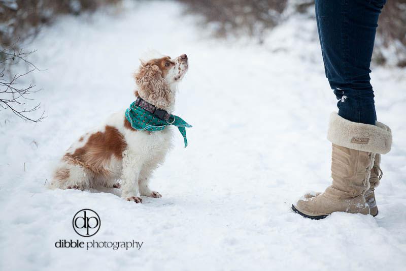 pet-photography-golden-lp01.jpg
