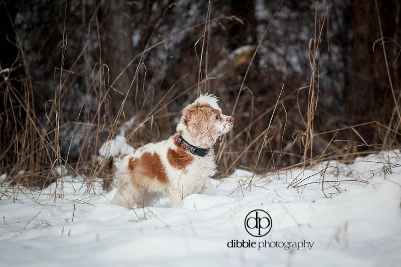 pet-photography-golden-lp04.jpg