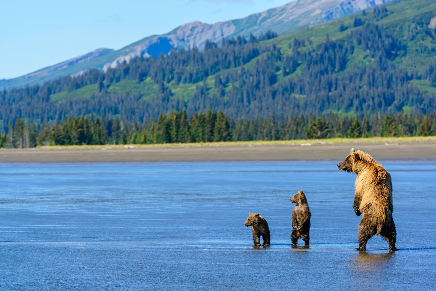 Mother and cubs digging for clams at Lake Clark National Park; Nikon D800E, 70–200mm, f/7, 1/1250s, ISO 400