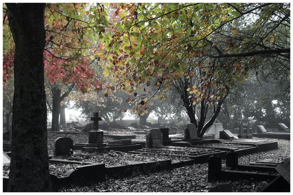Autumn Morning Silence, Joanne Payne