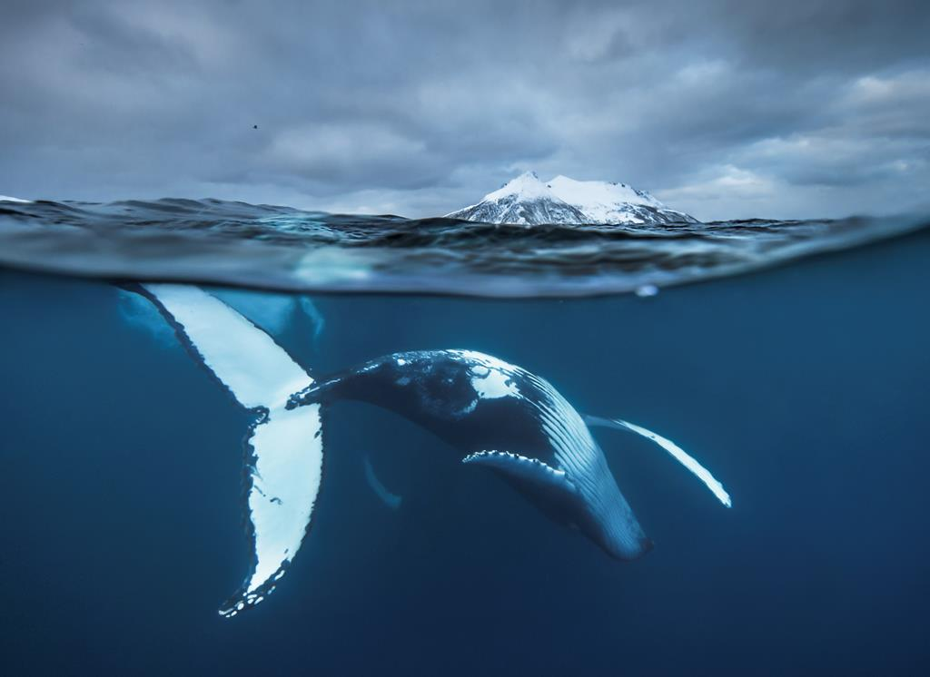Audun Rikardsen, Norway, Wildlife Photographer of the Year