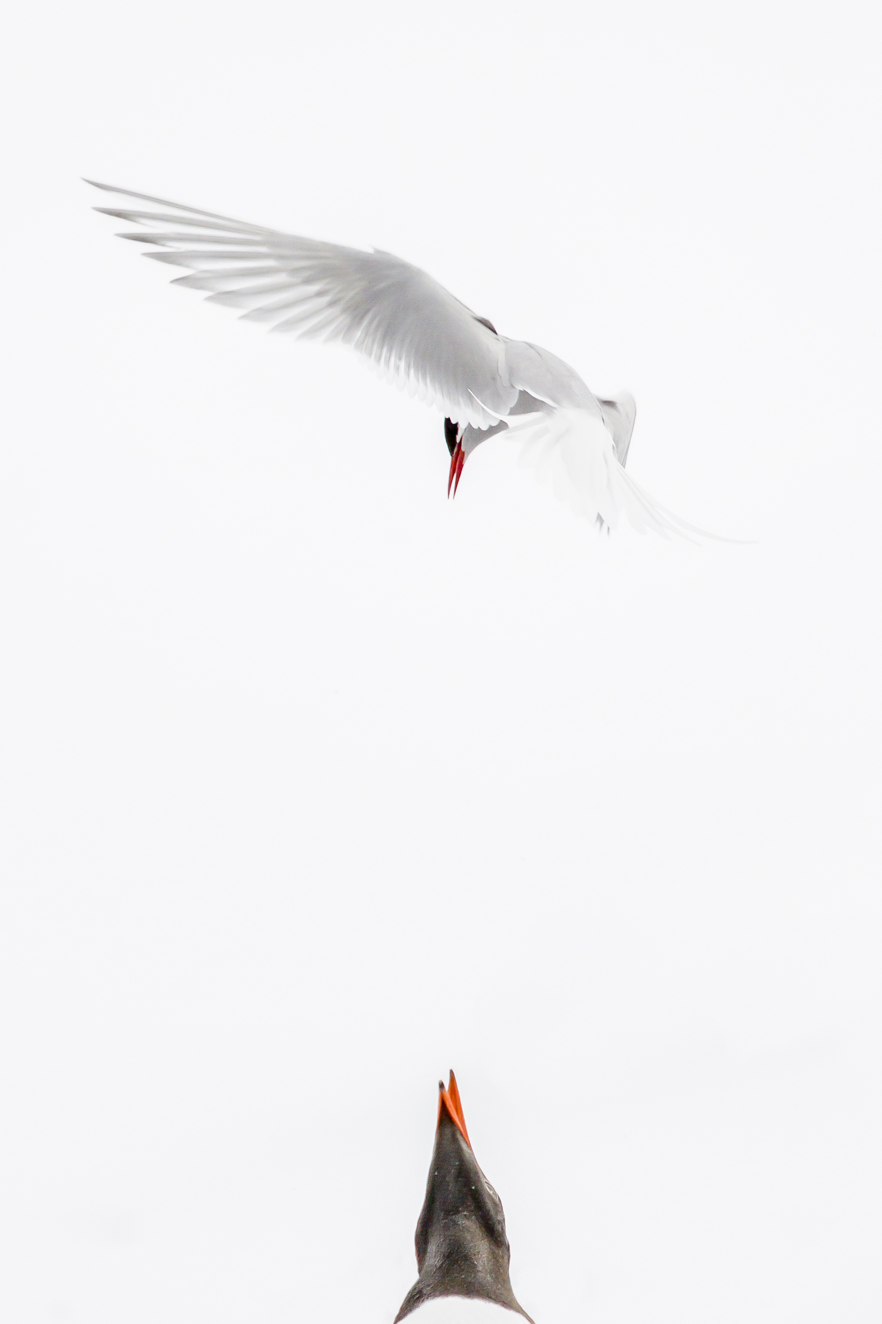 Nature category winner, Ben Jackson, Tiny but mighty