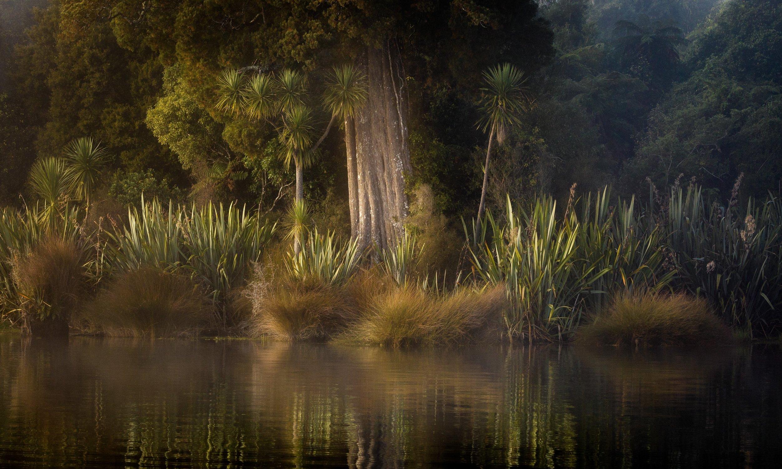 Brian Eastwood, Ancient Forest, Gold, 2018 Laurie Thomas Landscape Salon