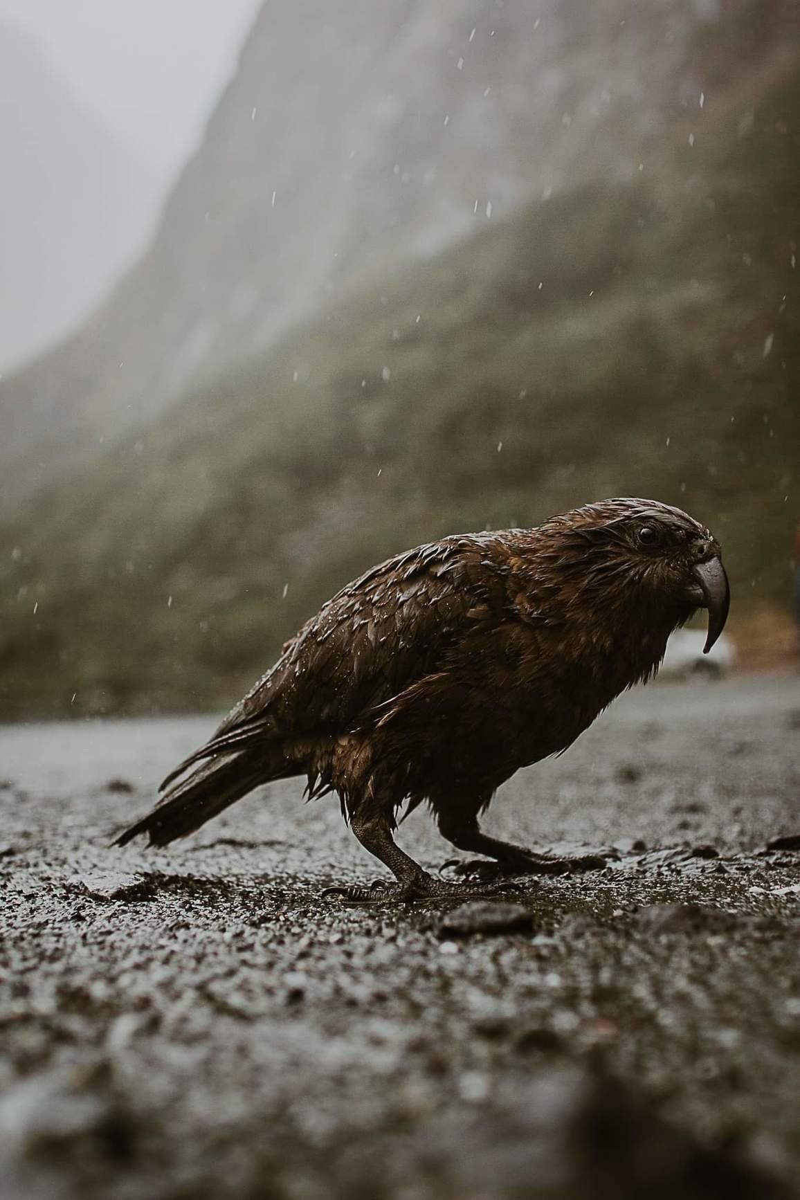 Nature — Kelly Gladwin