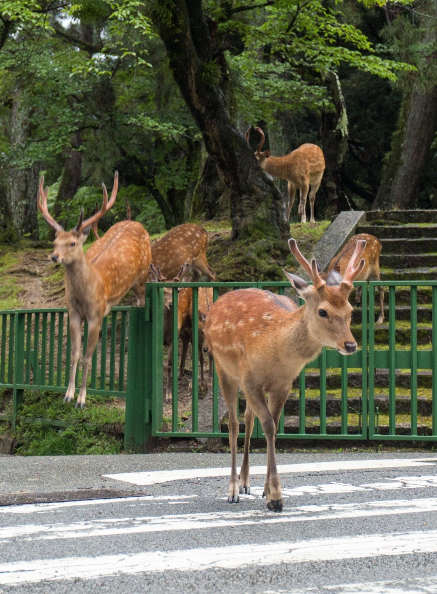 Yoko+Ishii%2C+from+Deer+Planet.jpg