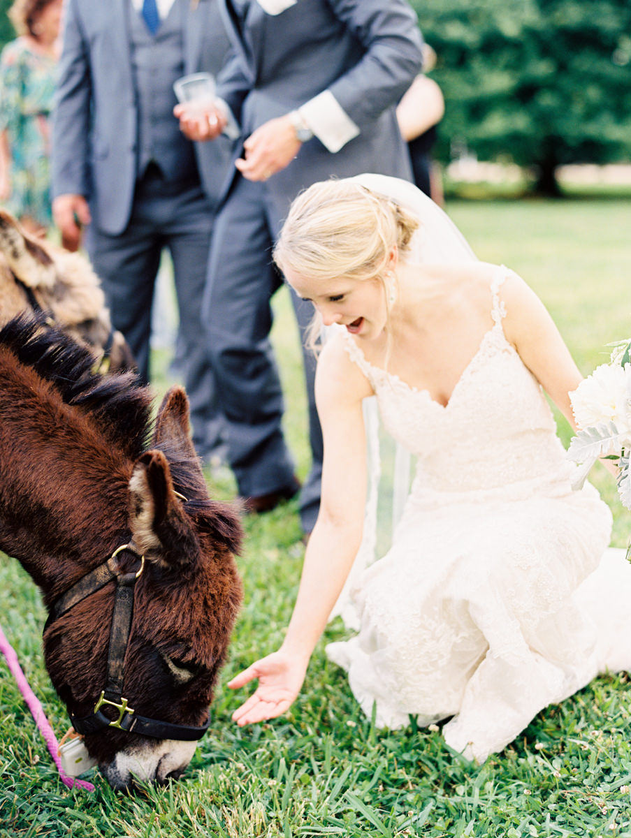 Bride Feeding Donkey