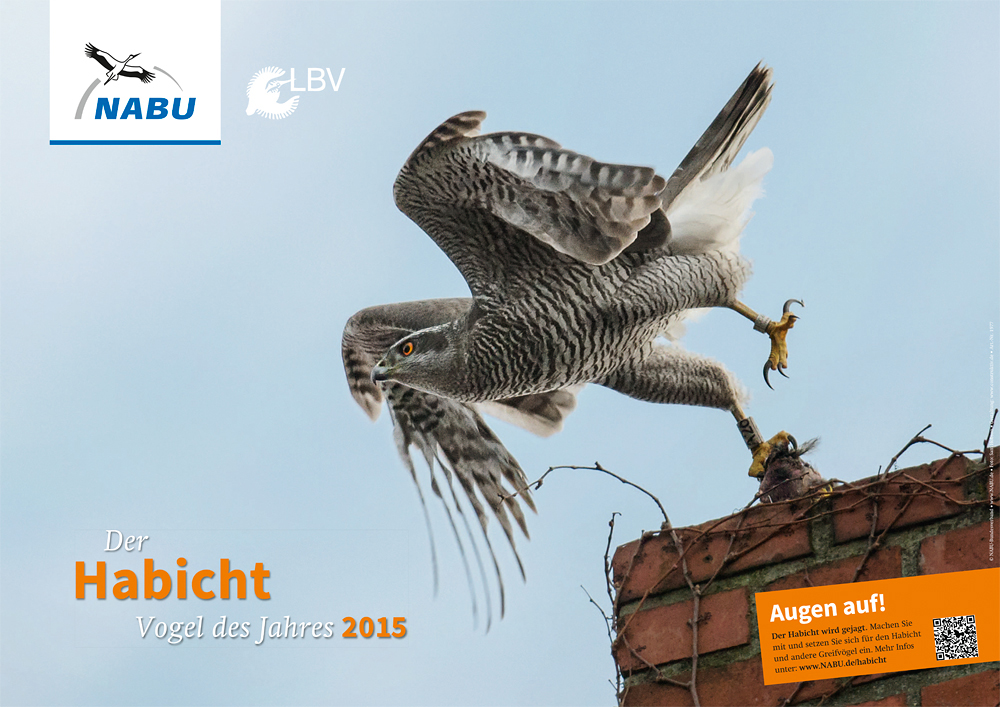 Goshawk_Bird_of_Year_2015