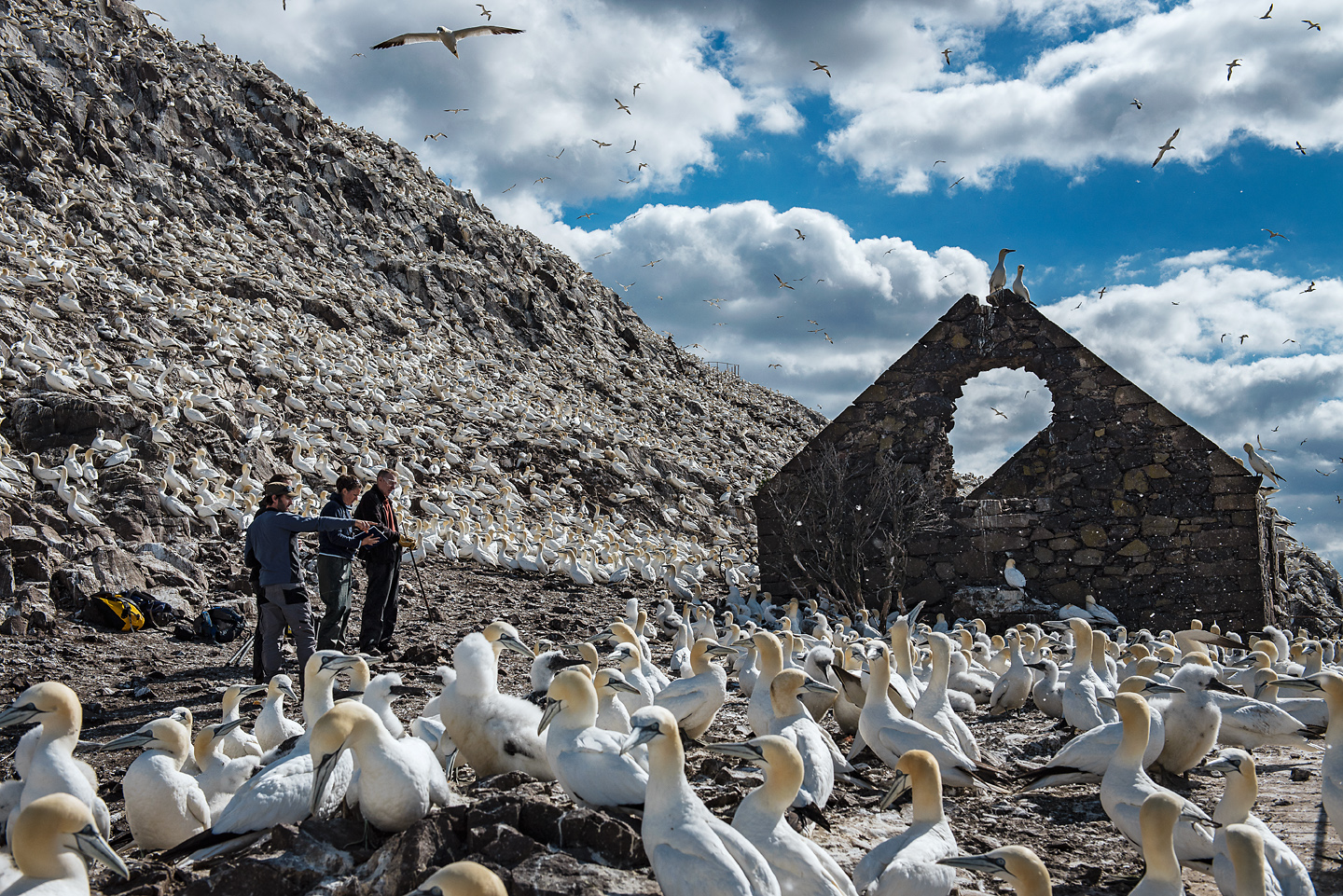 Outside the ruins of an ancient chapel, the team look for previous study birds and single out individuals to attach with monitoring devices