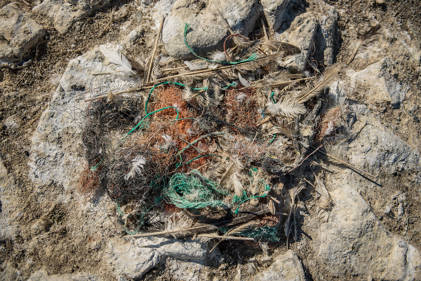 Removing the plastic would mean destroying nests and for a species which returns to the same nest each year, this would be too disruptive to the colony