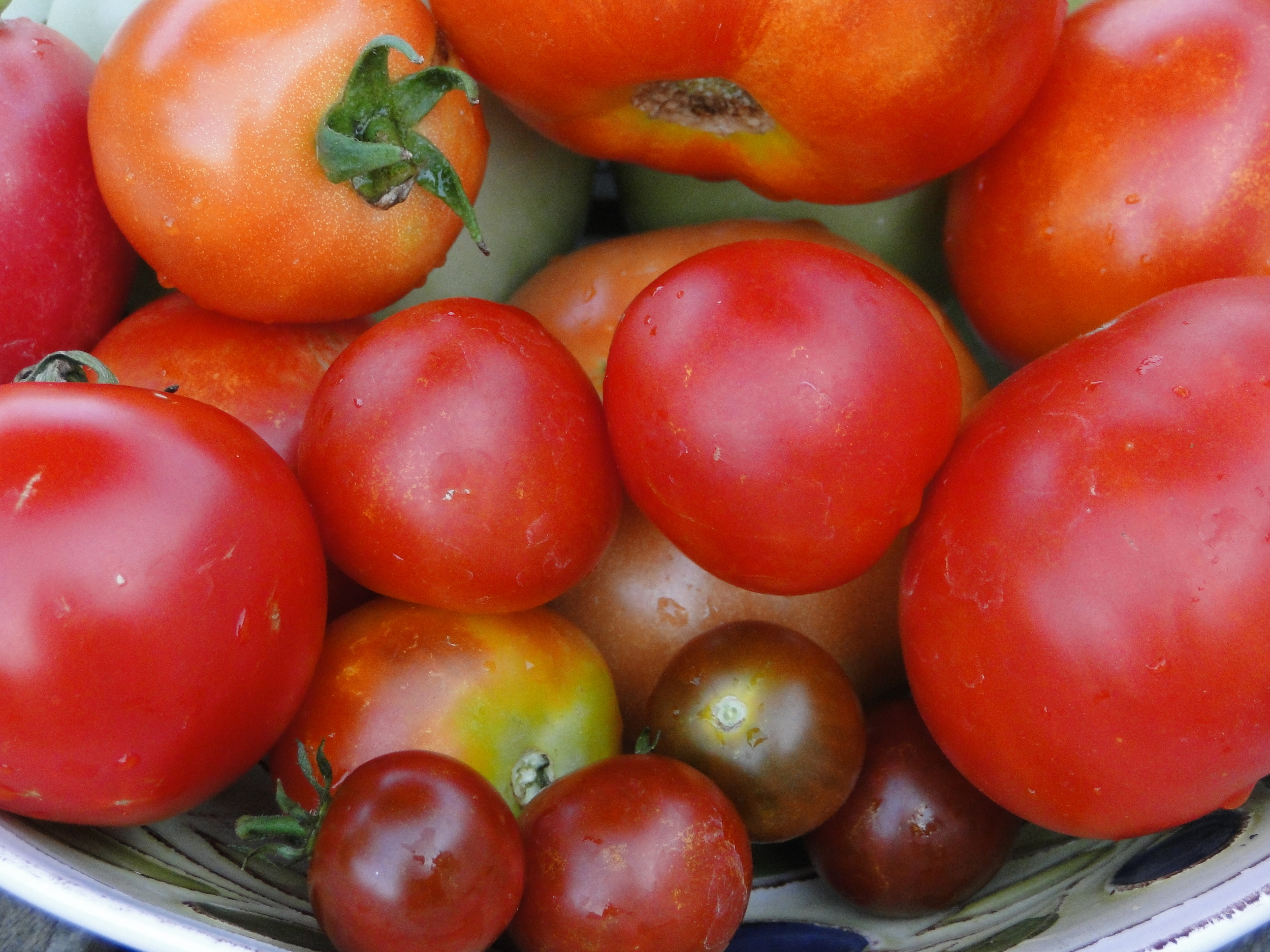 Several varieties of fresh tomatoes from our garden. The small dark tomato is a black cherry. They are so sweet!