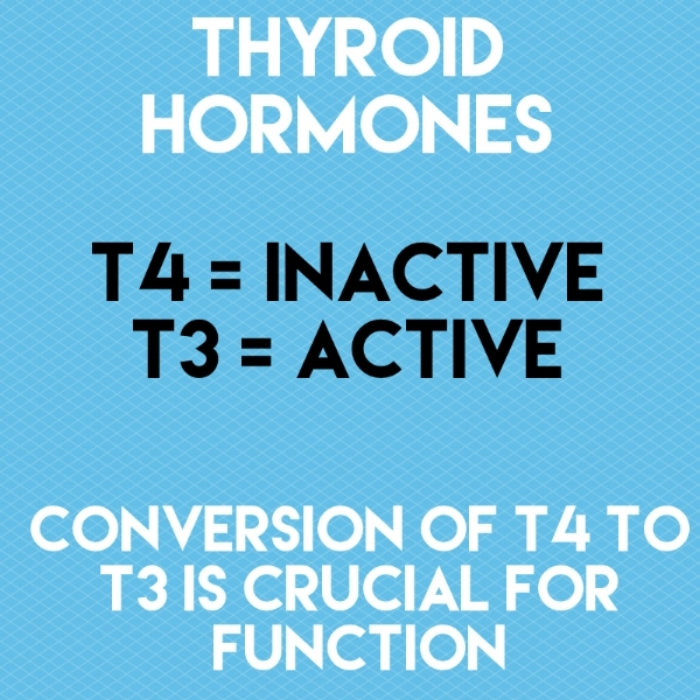 Thyroid hormones .jpeg