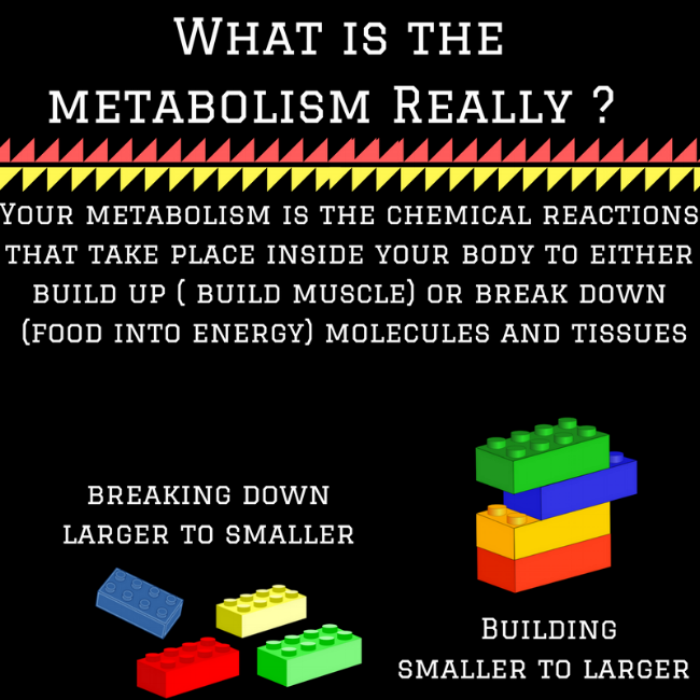 What is the metabolism Really -.png