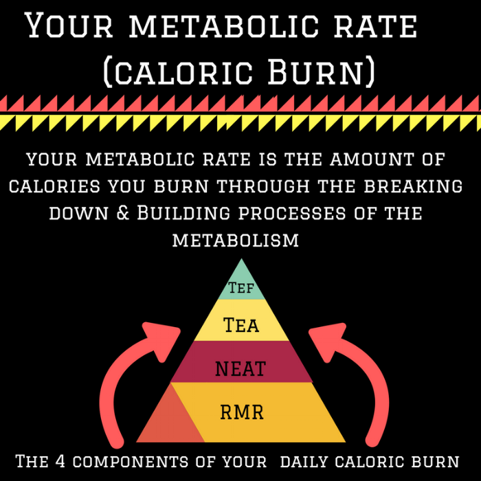 Your metabolic rate (caloric Burn) (2).png