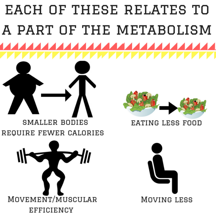 each of these relates to a part of the metabolism (1).png