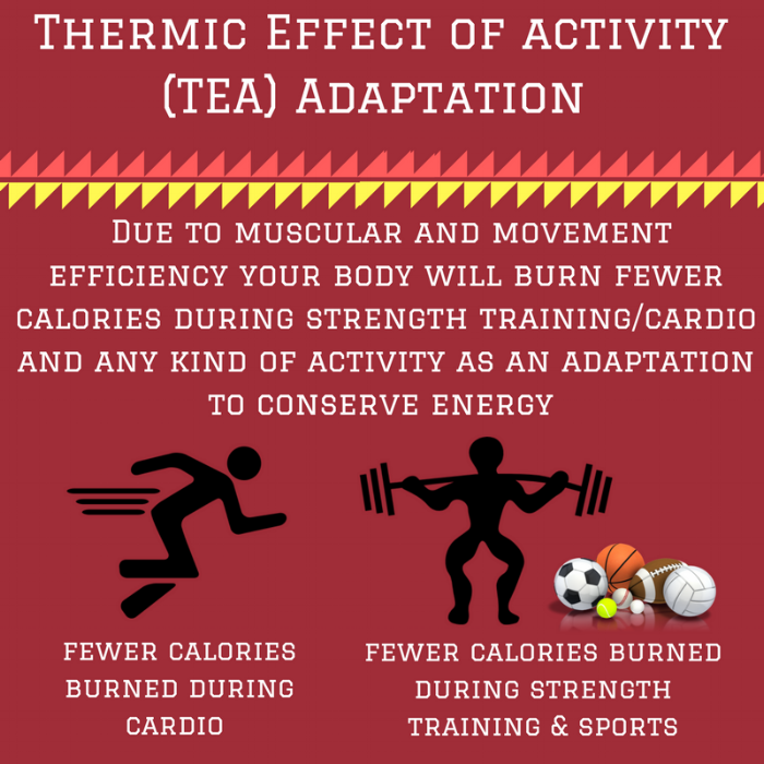 Thermic Effect of activity (TEA) Adaptation.png