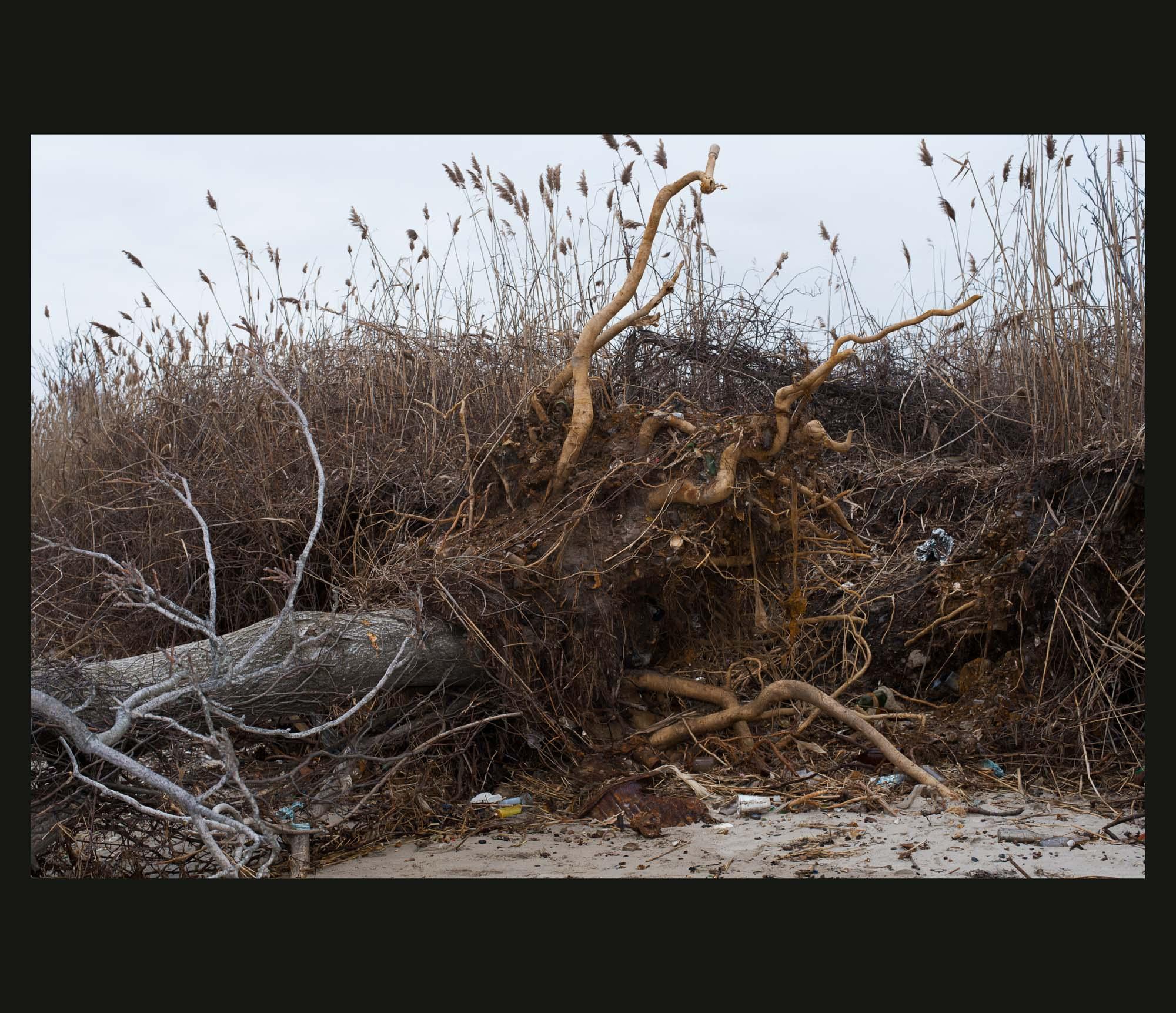 Buried Garden-22.jpg