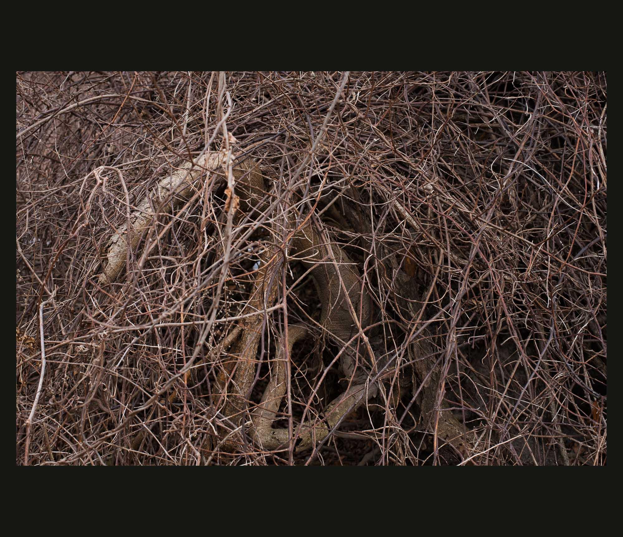 Buried Garden-24.jpg
