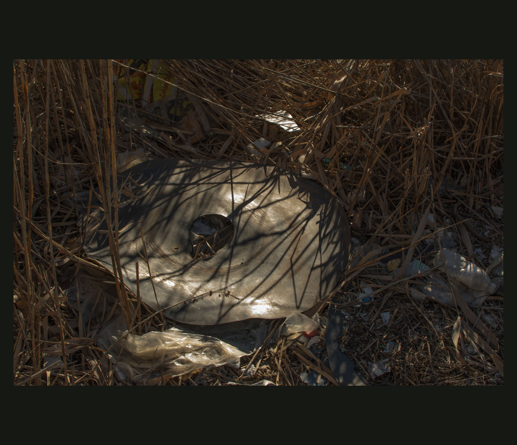 Buried Garden-28.jpg