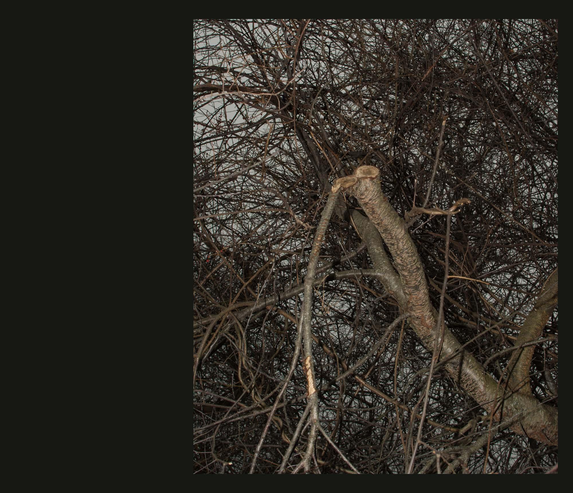 Buried Garden-31.jpg