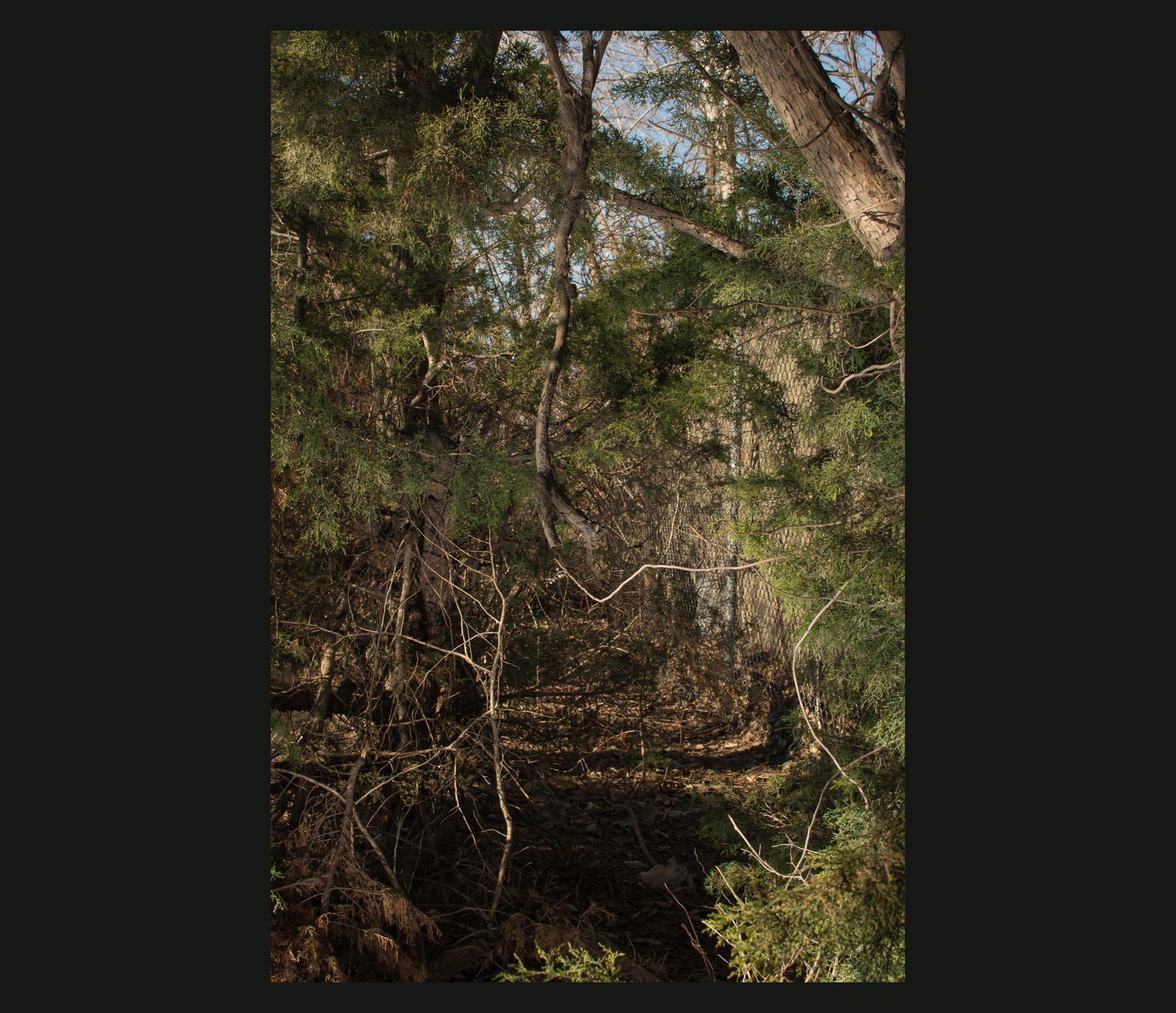 Buried Garden-32.jpg