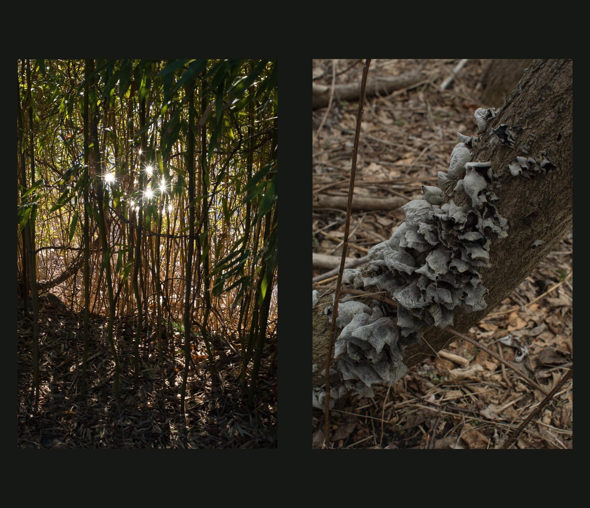 Buried Garden-3.jpg