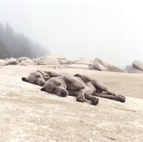 William Wegman, Washed Up, 2002