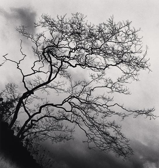 Michael Kenna |  Temple Trees