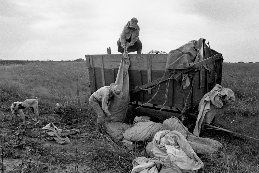 Among the last of the German tenant farmers picking cotton,   East Texas, 1976, Wendy Watriss