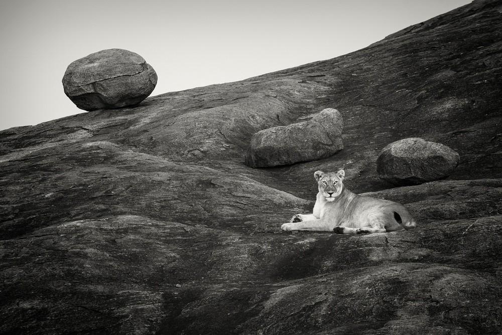 © Pekka  Järventaus