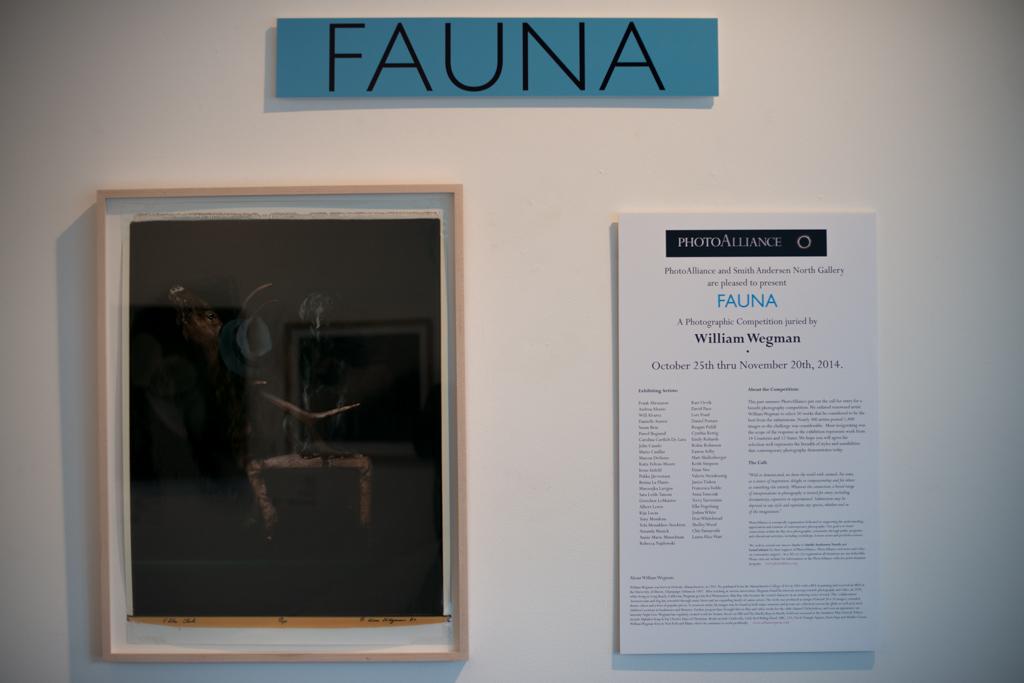 Fauna-6.jpg