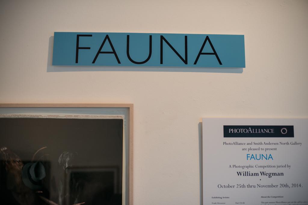 Fauna-7.jpg