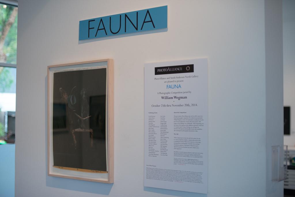 Fauna-9.jpg