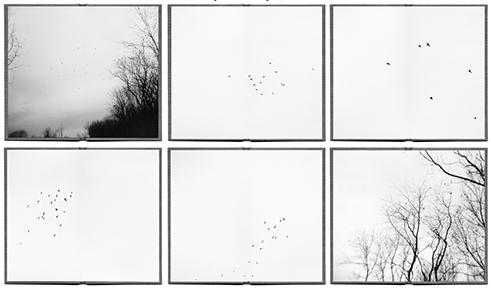 ©  Paula McCartney     Alight, 2005