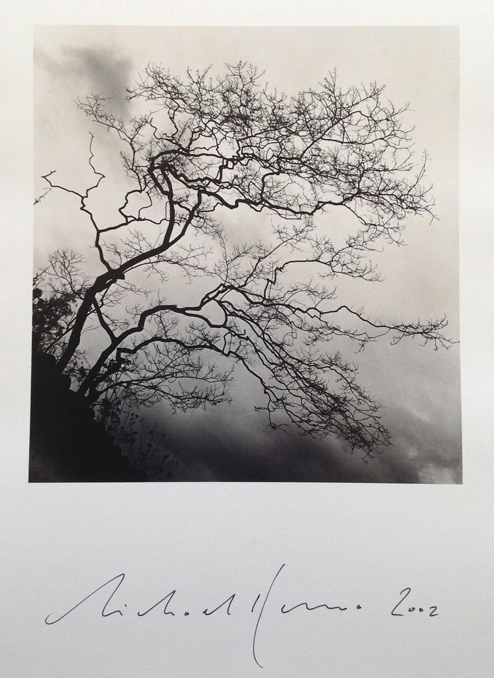 © Michael Kenna,   Temple Trees